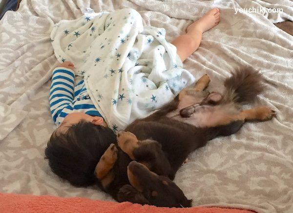 犬の添い寝